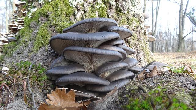 Houby a houbičky, to je moje potěšení