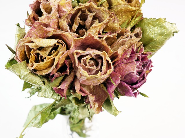kytice suchých růží